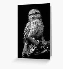 Frogmouth Greeting Card
