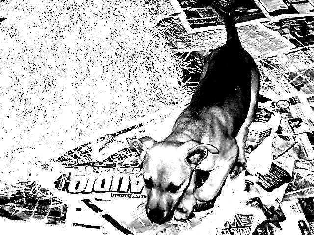 dog by yellowcar9