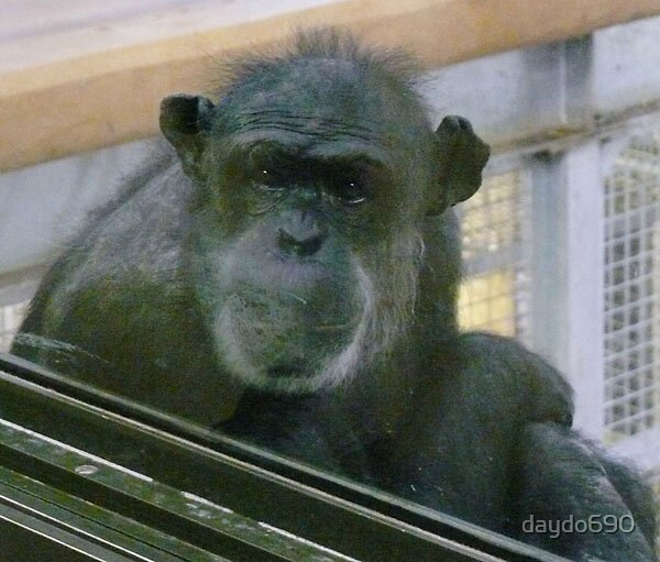 sad monkey by daydo690