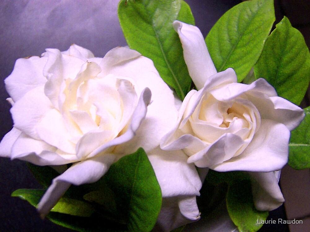 Gardenias by Laurie Rawdon