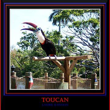 Toucan by lrawdon