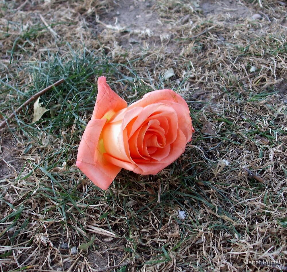 Forgotten Rose by Janet Rymal