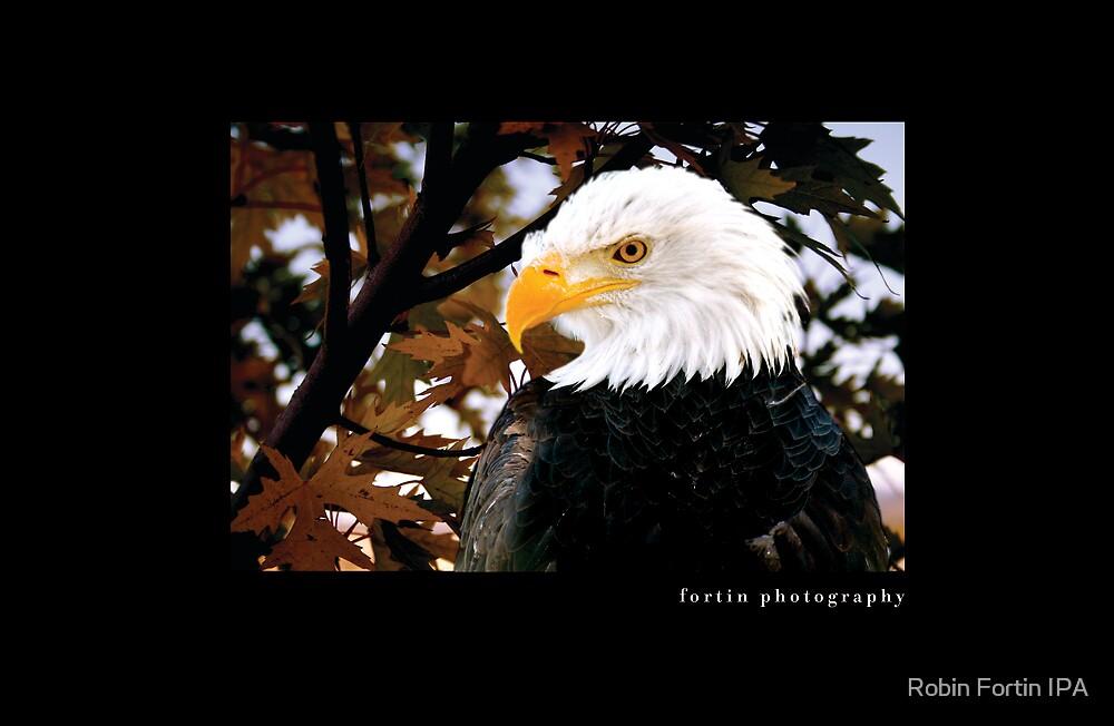 Bald Eagle by Robin Fortin IPA