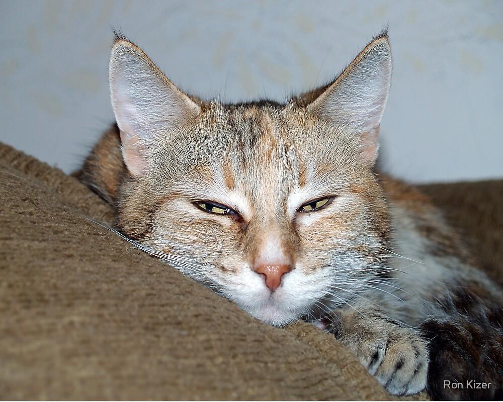 Sleepy Cat by Ron Kizer