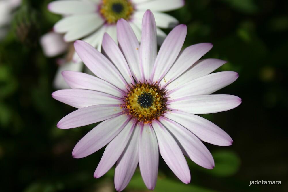 daisy by jadetamara