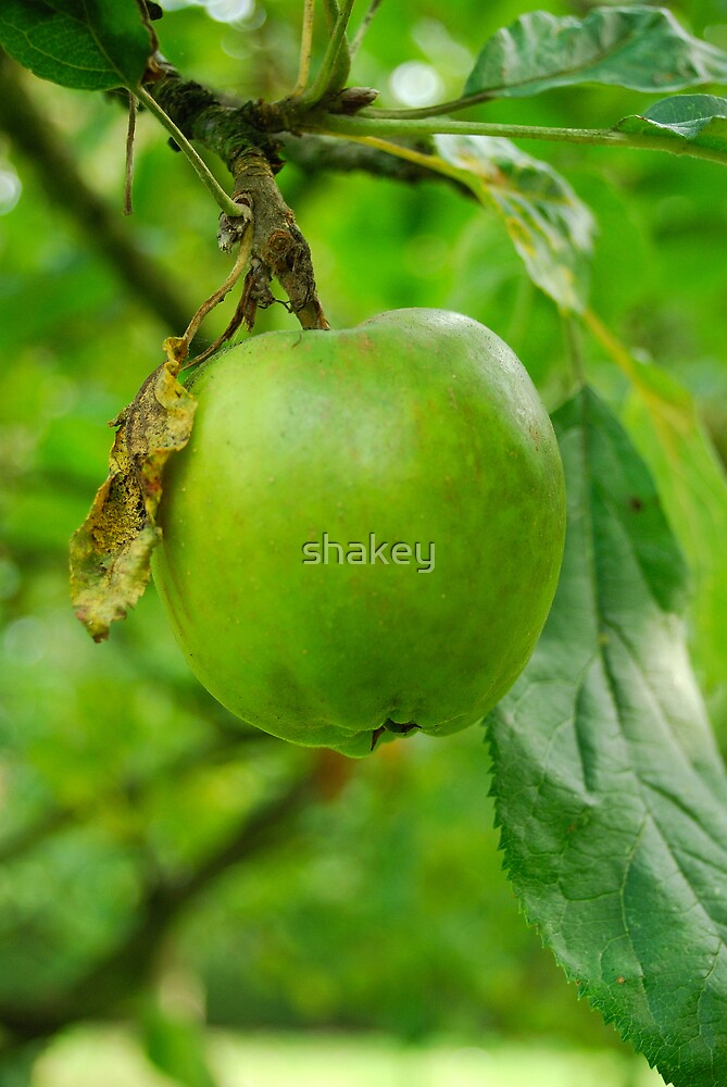 Apple of my eye by shakey