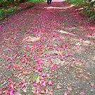 Path by alnina