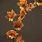 Warm Flowers by Adam Bykowski