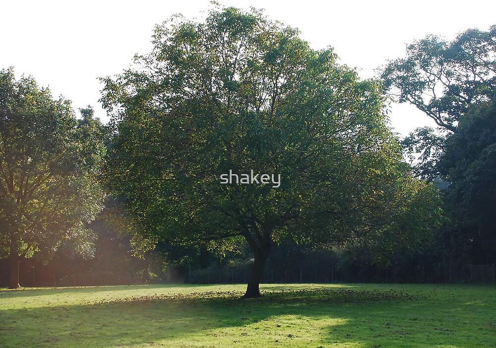Shade by shakey