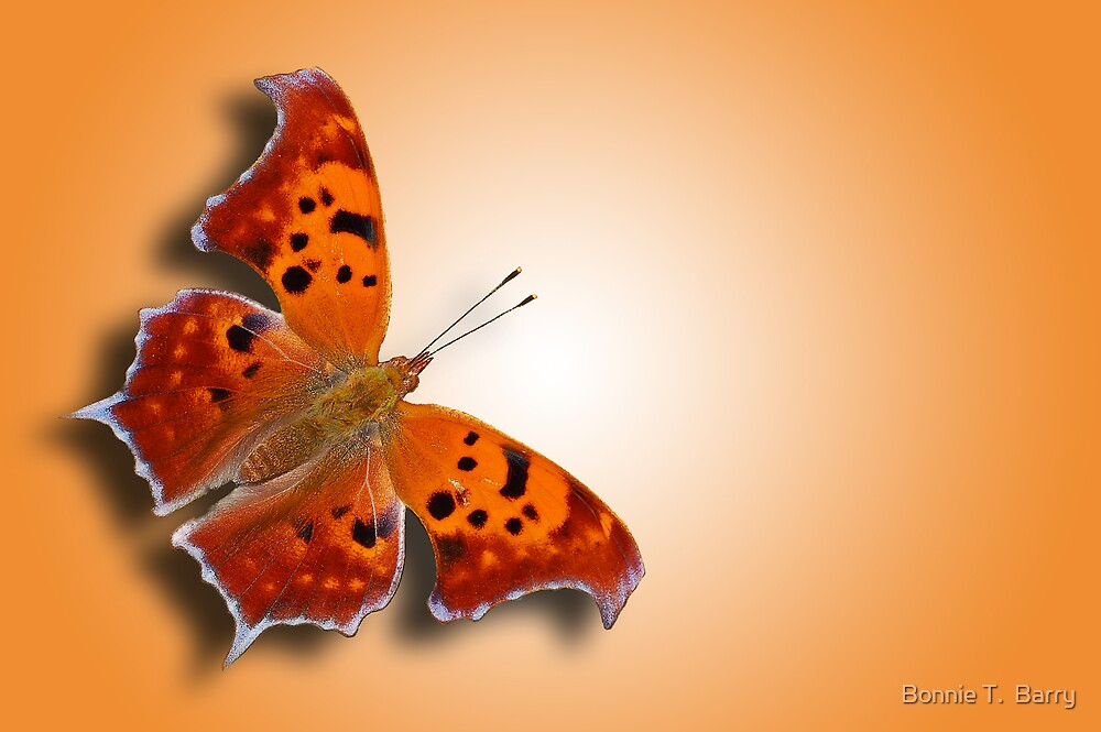 Question Mark Butterfly on Orange Shimmer by Bonnie T.  Barry