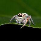 Cute Spider by greencardigan