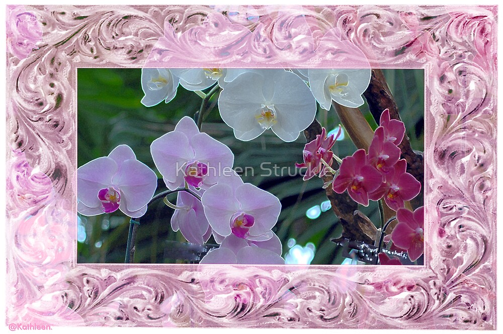 Lovely Orchids by Kathleen Struckle