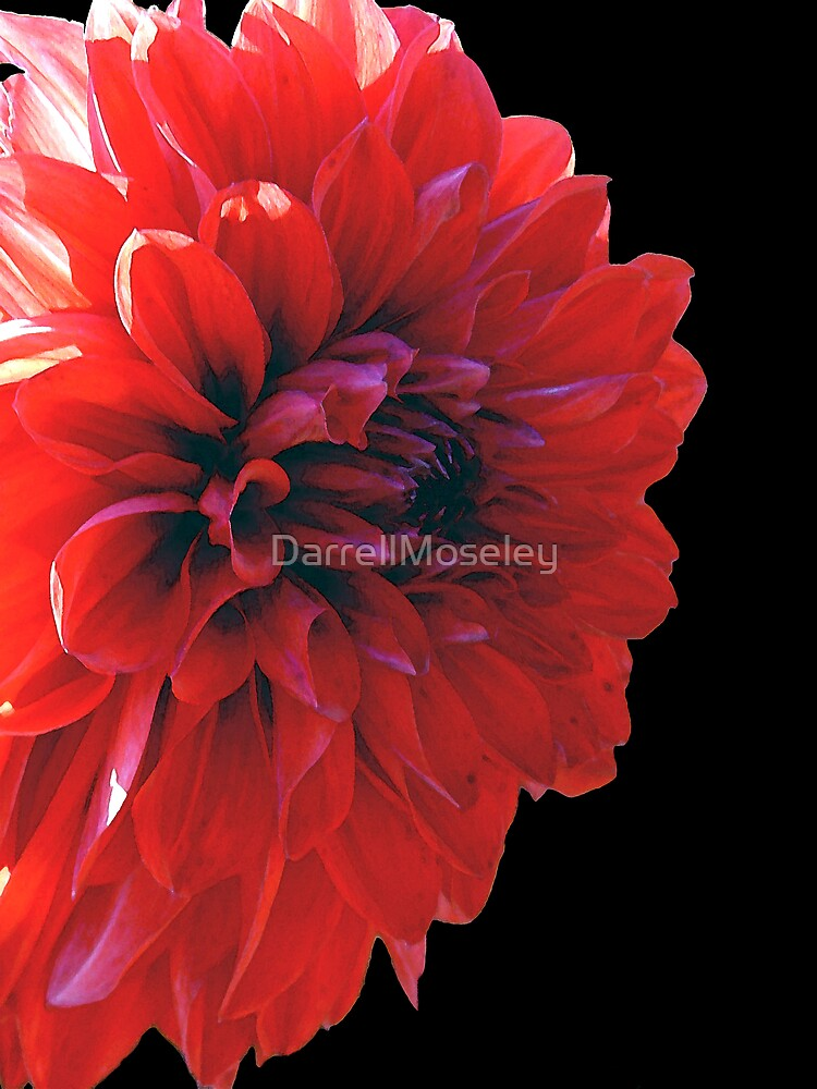 EXPLOSIVE RED by DarrellMoseley