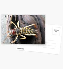 New Zealand Weta # 1 Postcards