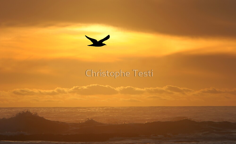 Flying Home by Christophe Testi