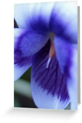 violet by ginny