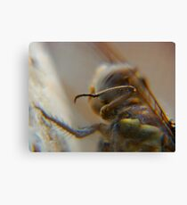 dragonfly5 Canvas Print