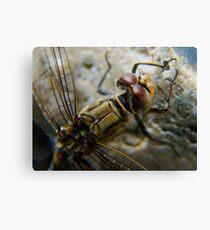 dragonfly7 Canvas Print