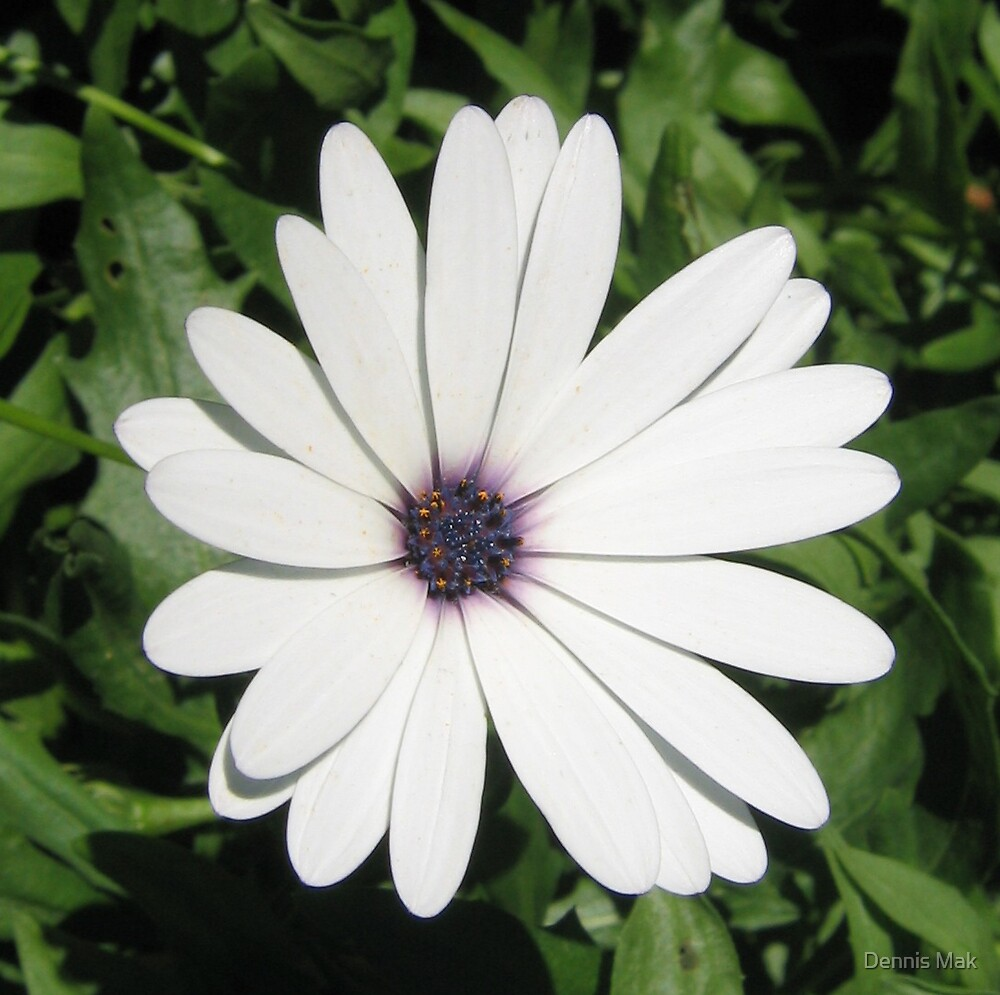 flower by Dennis Mak