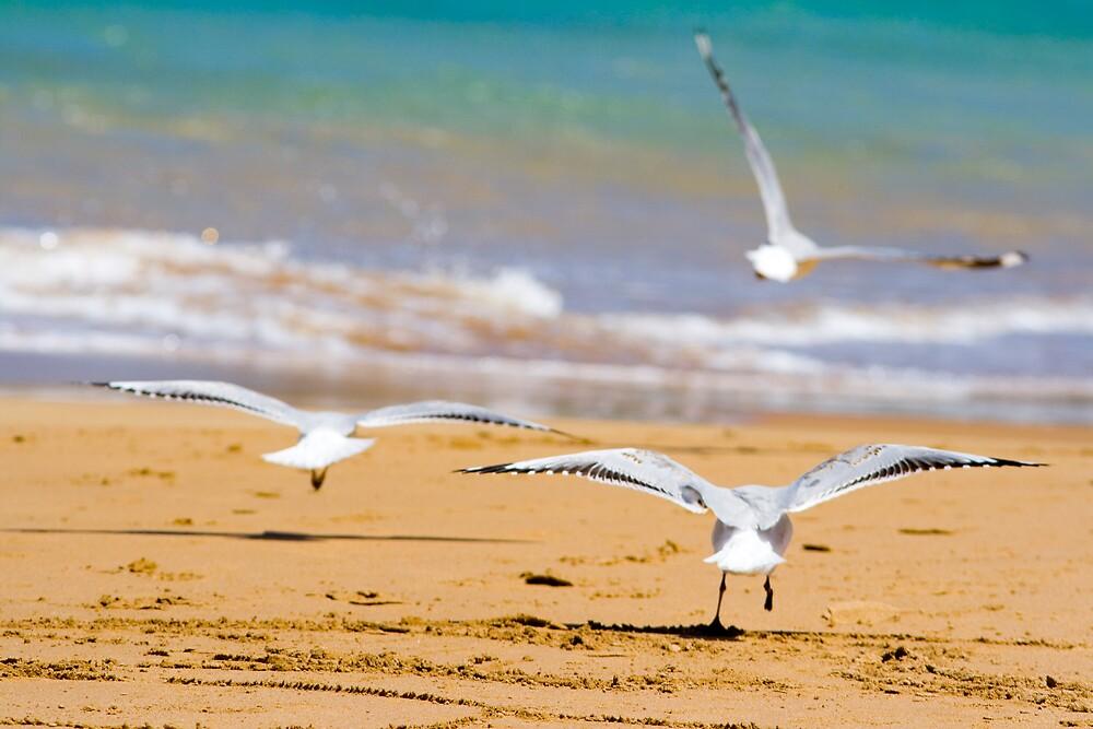 Seagulls by henleyhelen