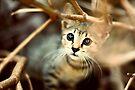 Kitten by Jasna