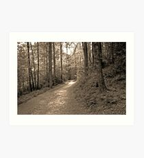 once upon a sunlit path... Art Print