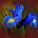 Blue Velvet by Joyce Knorz