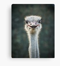 Ostrich in South Africa Canvas Print