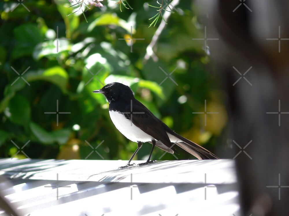 Wagtail on a Hot Tin Roof by Sandra Chung