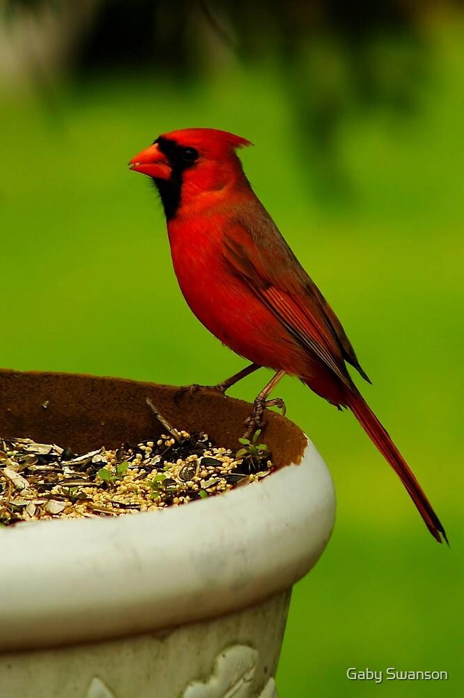 cardinal by Gabi Swanson