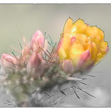 Yellow Desert Flower by LOUOATES