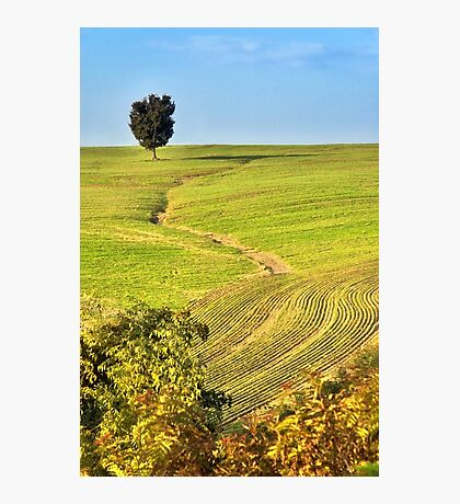 The tree and the furrows Photographic Print