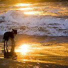 Dog Day Afternoon by Martin Campbell
