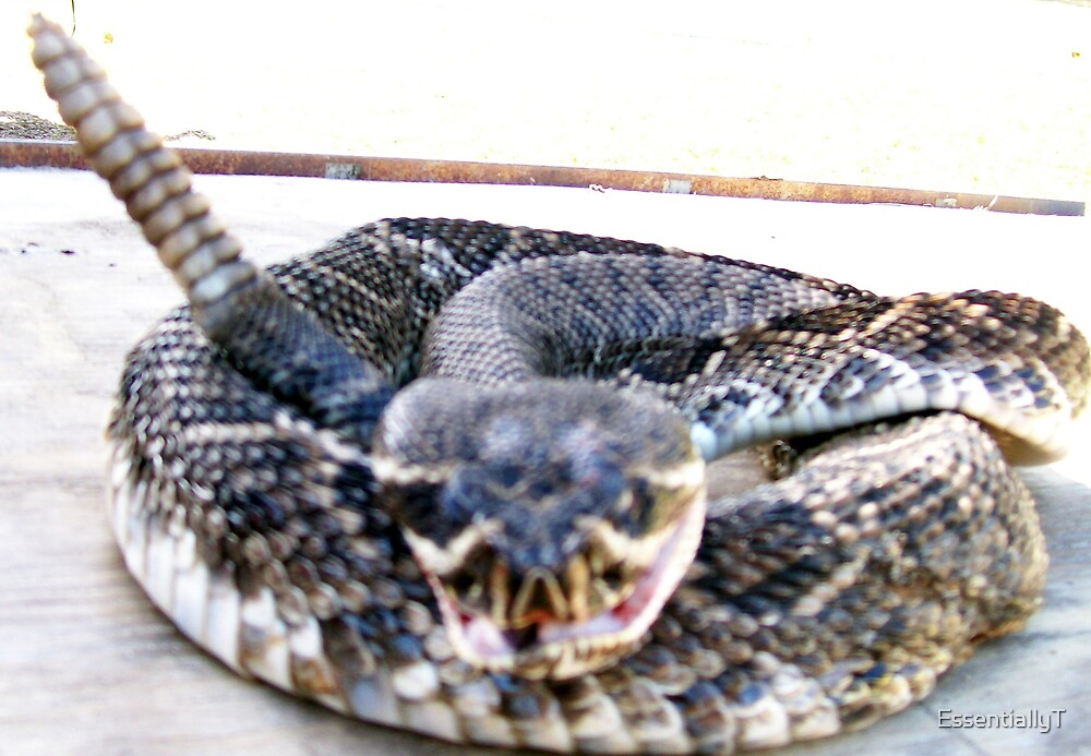 Rattle Snake by EssentiallyT