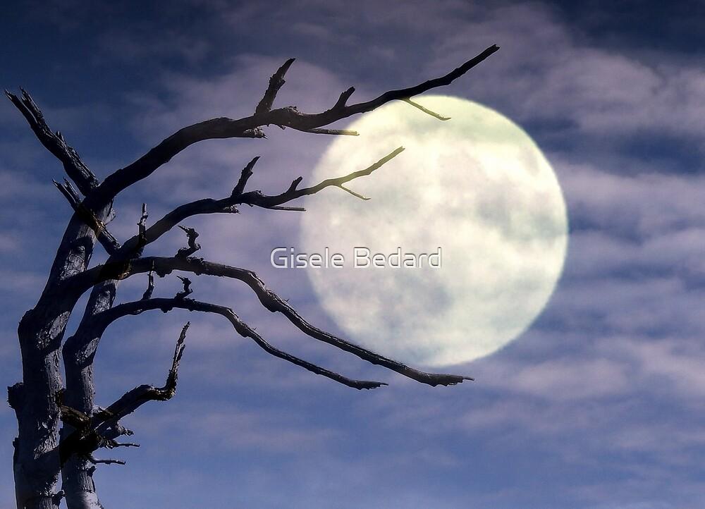 The Moon Holder by Gisele Bedard