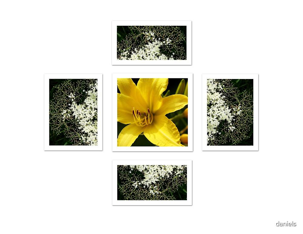 daylily & wildflower by daniels