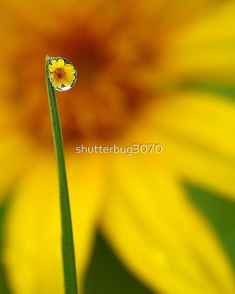 Dewdrop Reflection by shutterbug3070