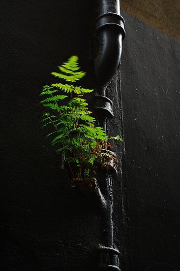 Urban Foliage by Jonathan Russell