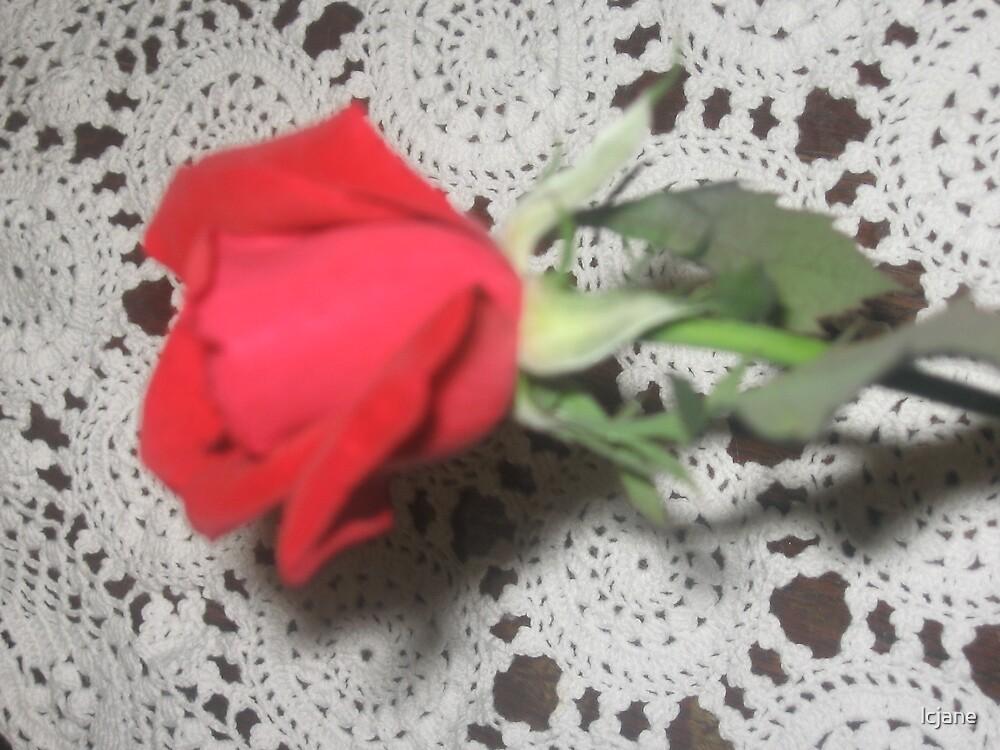 """LONE ROSE"" by lcjane"