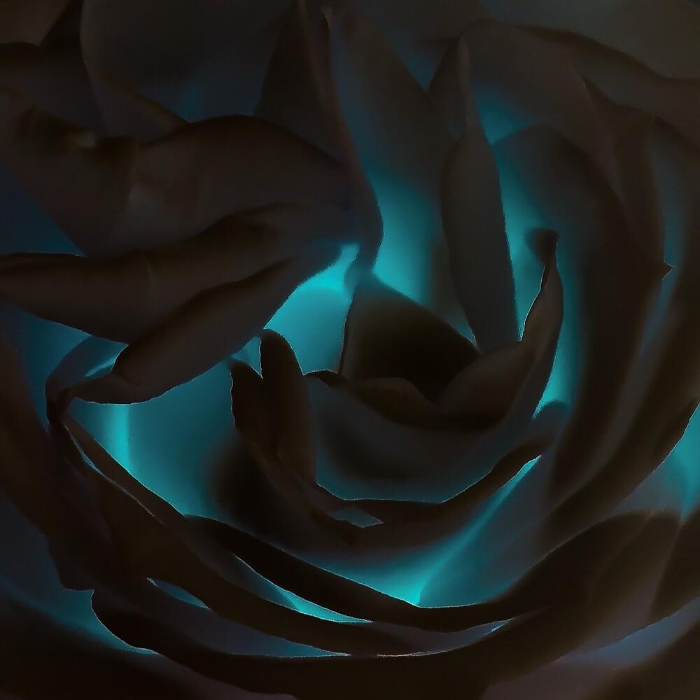 Modern Rose I by Jacqueline Cooper