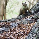 Squirrel with Moss by David Mann