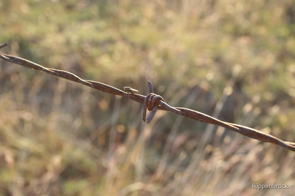 Barbwire by lkippenbrock
