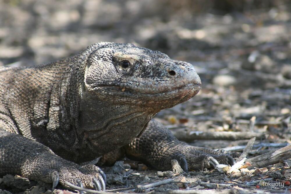 Komodo dragon by tokyoty