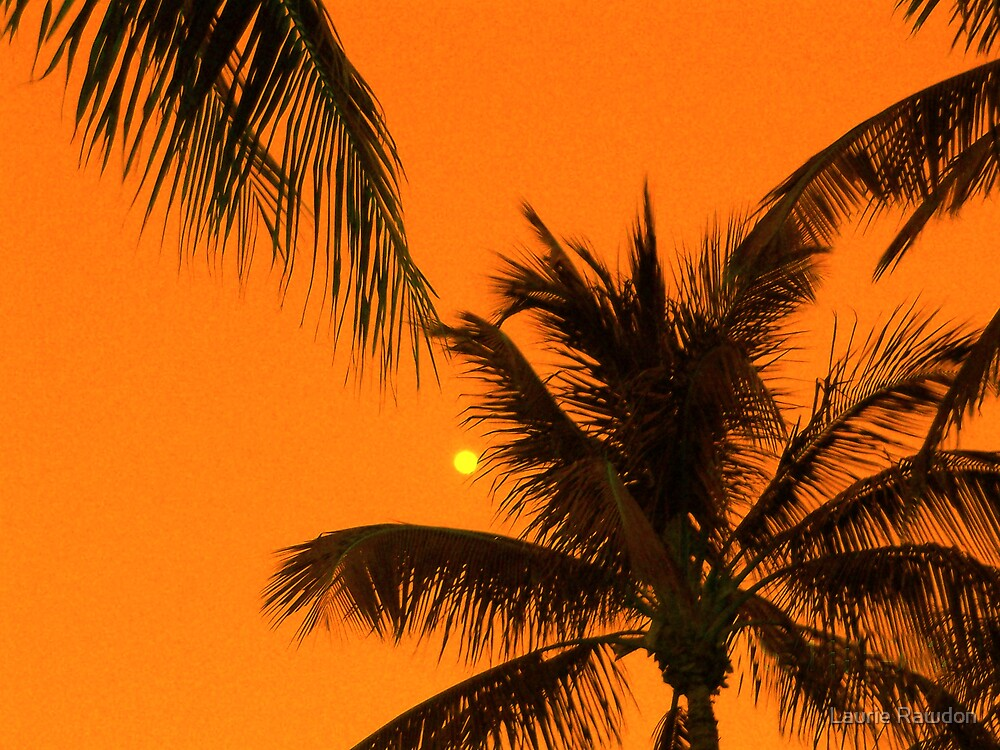 Palms by Laurie Rawdon