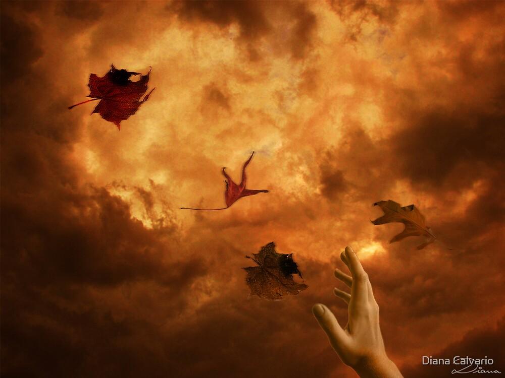 catcher in the storm by Diana Calvario