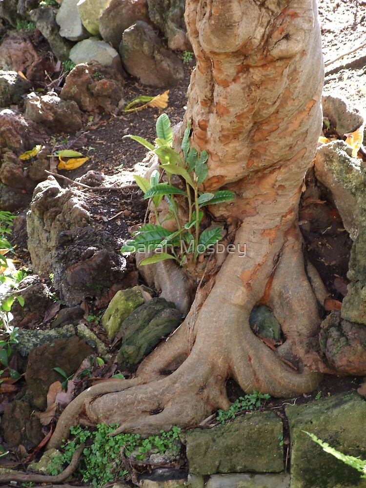 Twisted Roots by Sarah Mosbey