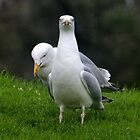 Are you looking at us............Dorset UK by lynn carter