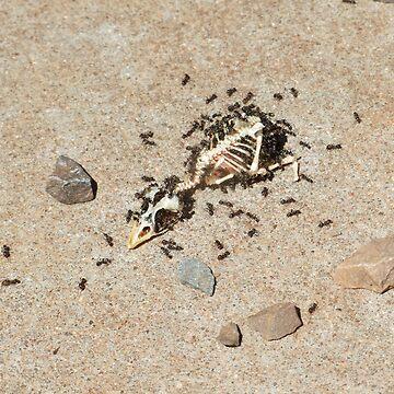 Skeletor!! by Mezoti