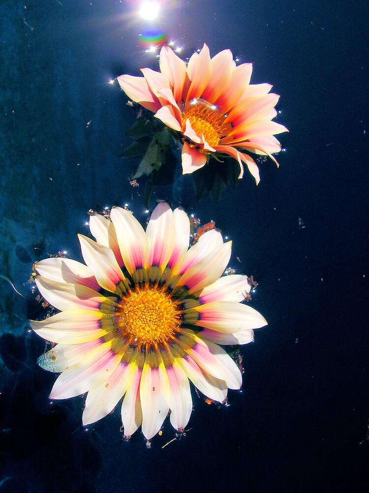 floating sunshine by Louise Richardson