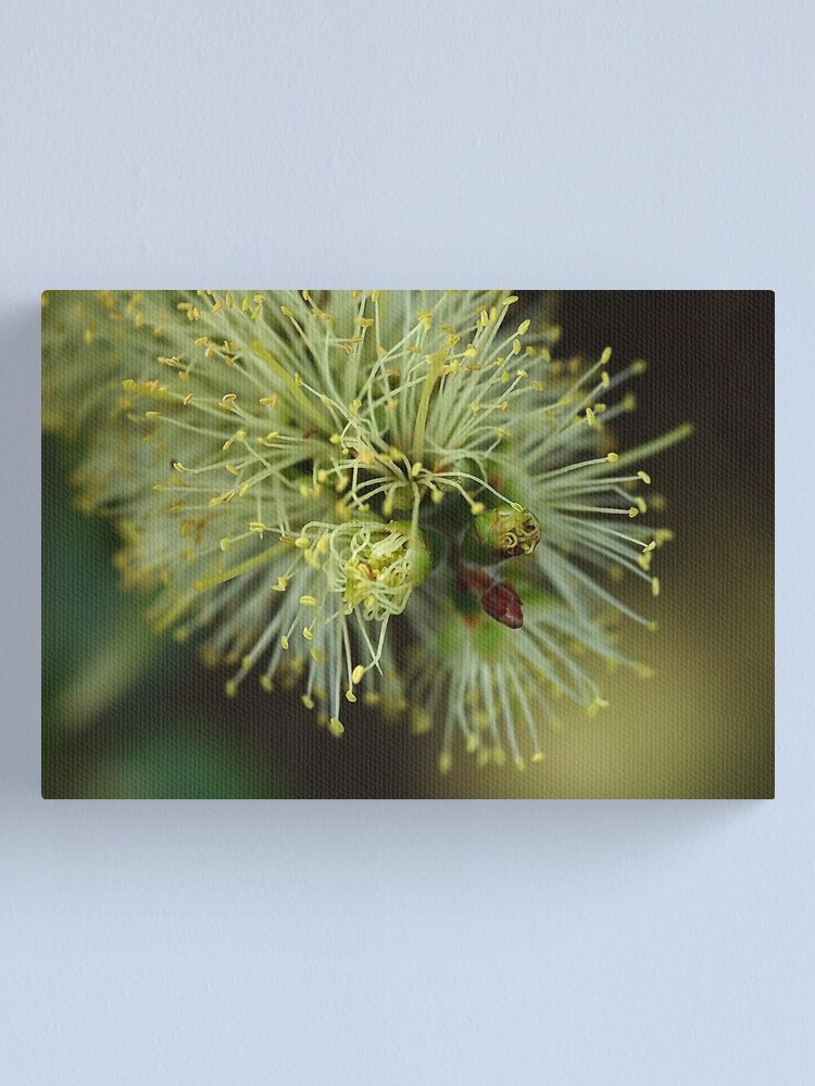 Alternate view of Stamens Canvas Print